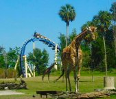 Busch Gardens - Rollercoasters and Safari Park