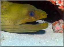 Little Deeper Charters - Moray Eel