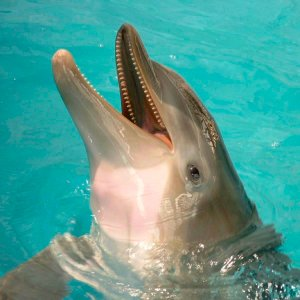 See Winter the Dolphin at Clearwater Marine Aquarium