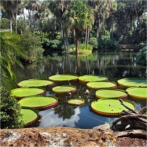 Bok Tower Gardens Lily Pond