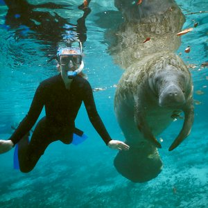 Swimming with Manatee's